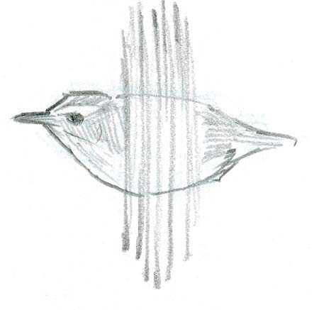 Wren in Flight ©2012 John Muir Laws.