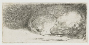 Rembrandt Sleeping Puppy