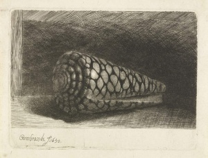 Rembrandts Shell at the DeYoung Museum