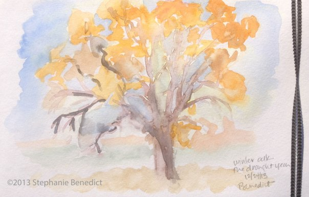 Benedict Oak Tree Sketch