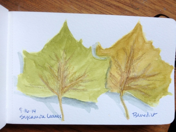 Sycamore Leaves Sketch